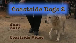 Coastside Dogs 2 video link
