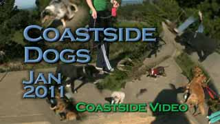Coastside Dogs video Link